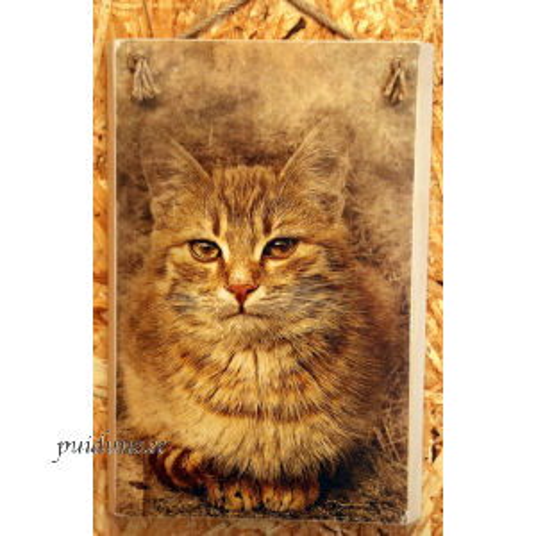 Pruunikas kass 20x29.png