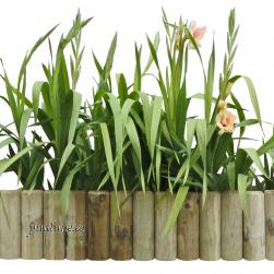 Jäik palissaad lillepeenra ääristamiseks (1 alus)